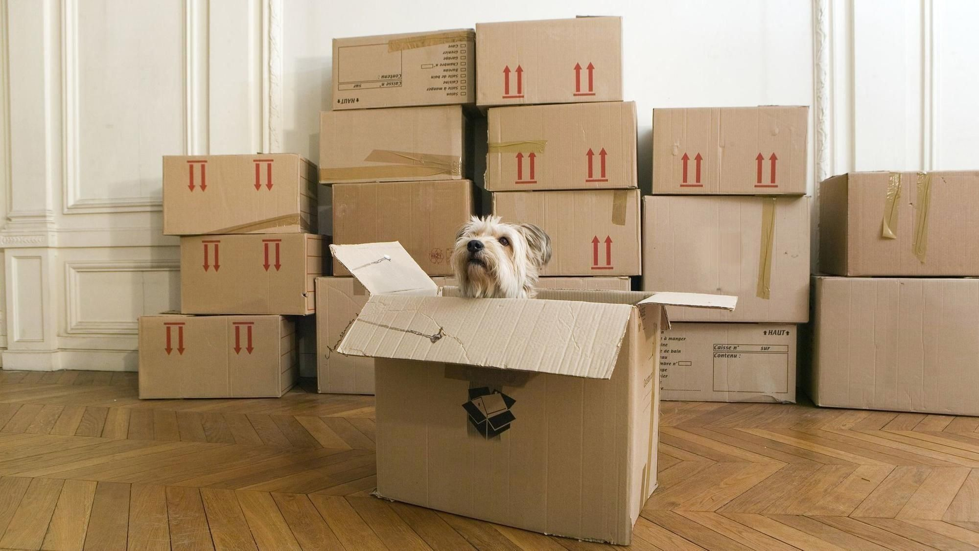 Pin On House Moving Tips Packing