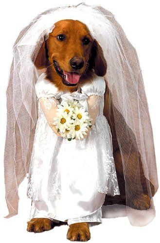 19 99 19 99 You Dog Can Be A Blushing Bride In This White