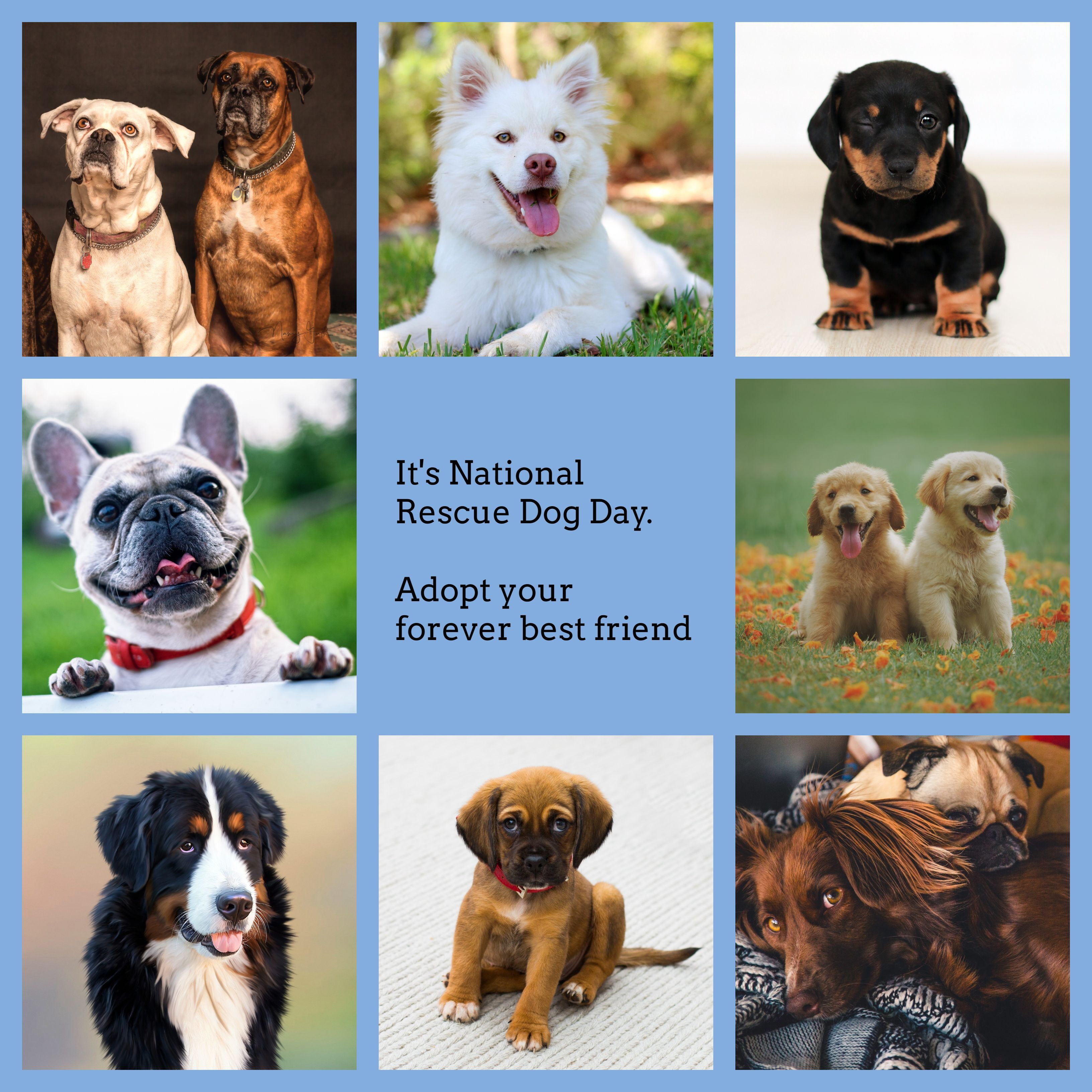 National Rescue Dog Day Rescue Dogs Little Dogs Dogs