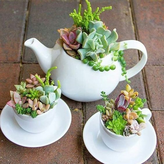 60+ Charming Succulent Indoor Garden Ideas 2019 - Page 59 of 64 #succulents
