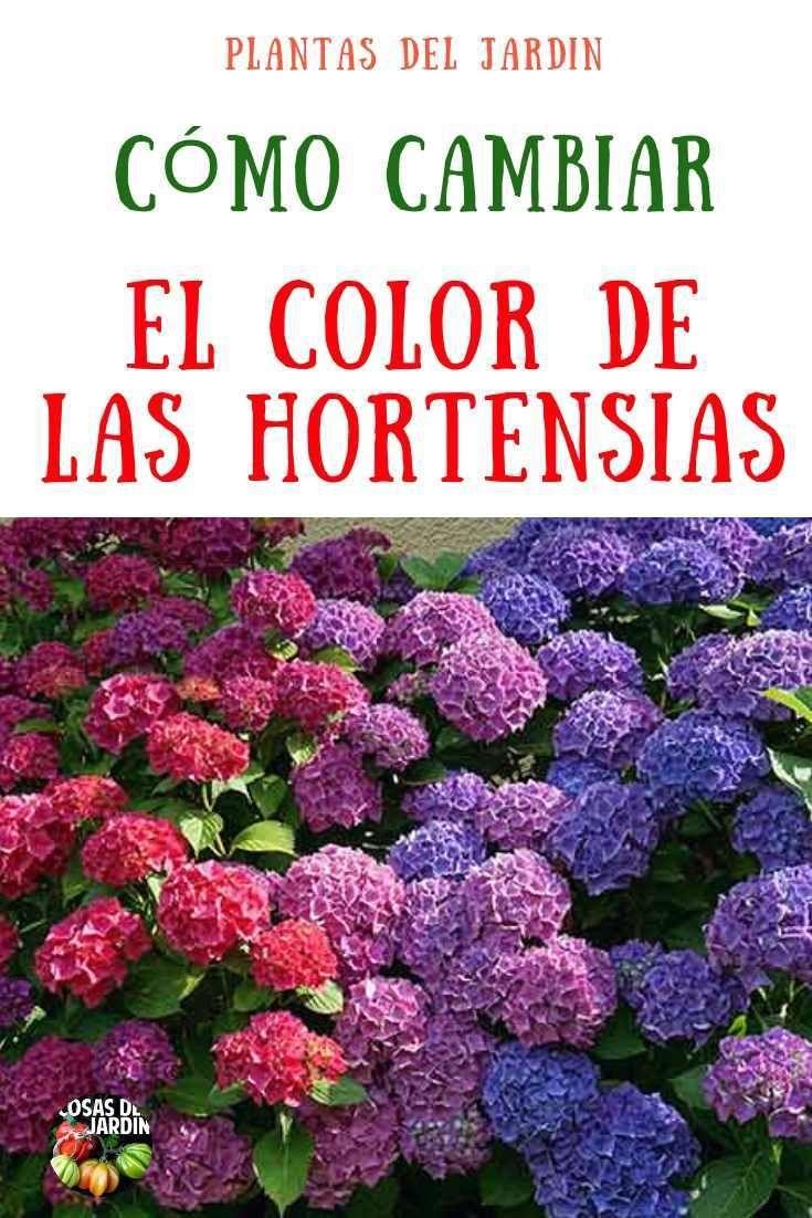 Como cambiar el color de las Hortensias