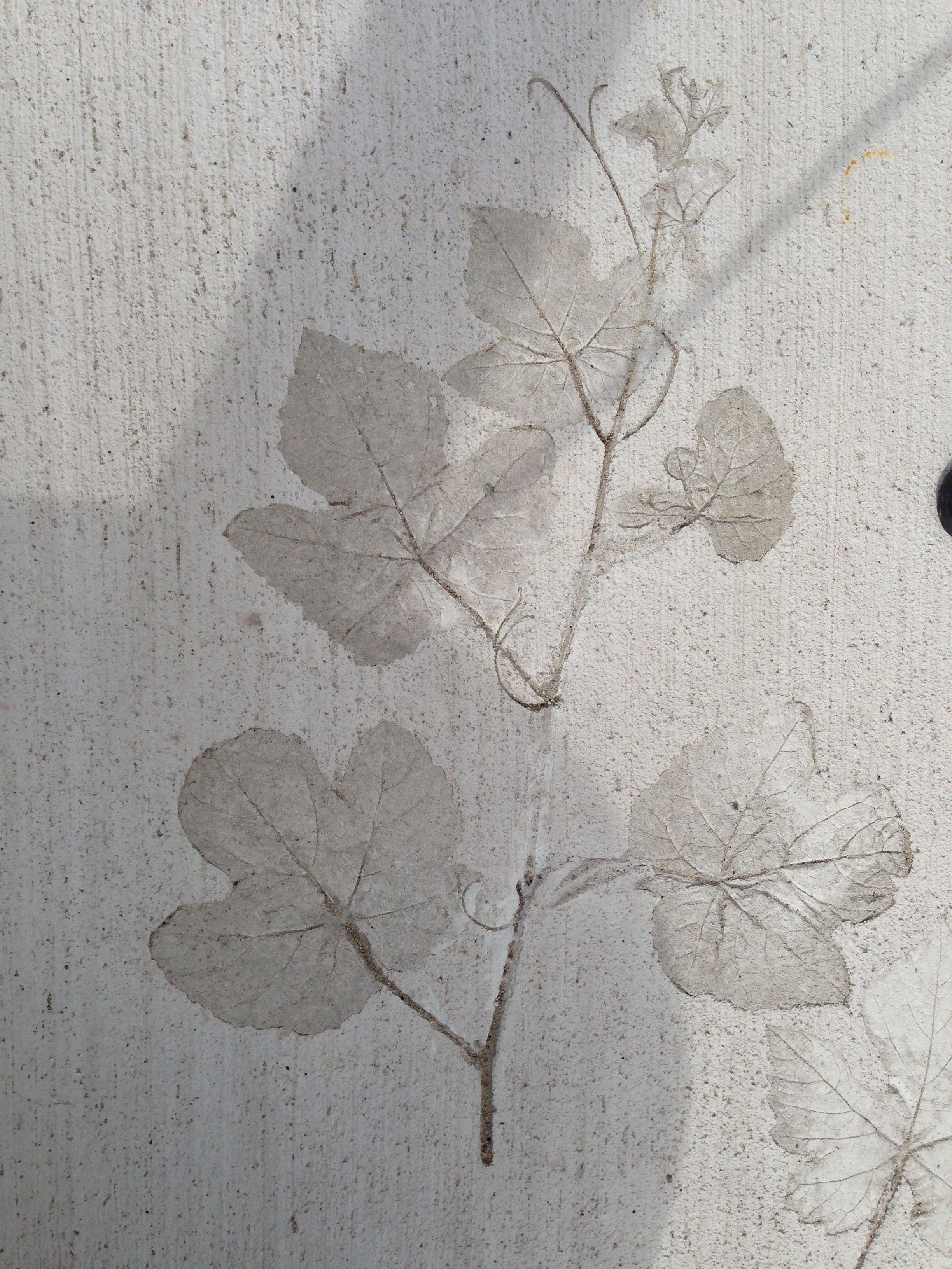 Leaves In Concrete Diy Pinterest In And Leaves
