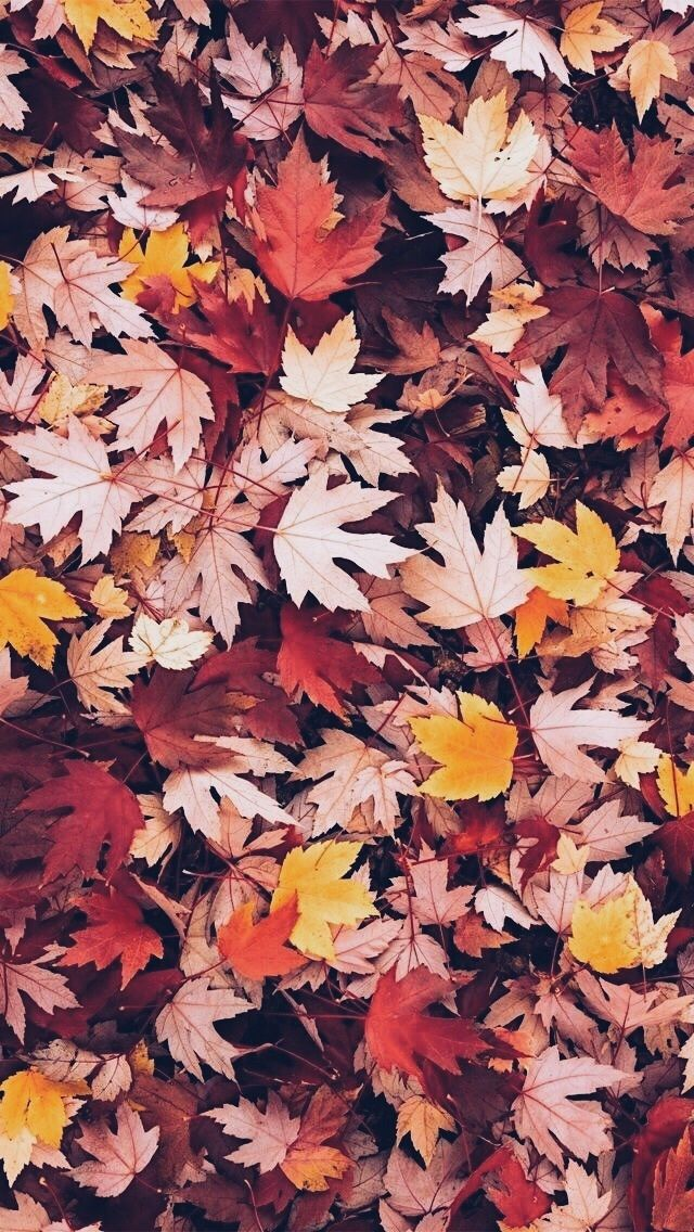 New List of Beautiful Fall Background for iPhone XS Max