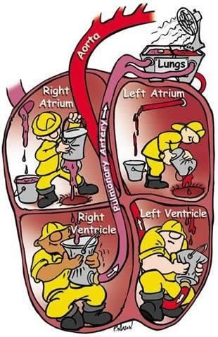 5b411a2cd24d6a738464107c35232869 awesome diagram for visual learners paramedic cardiac nursing