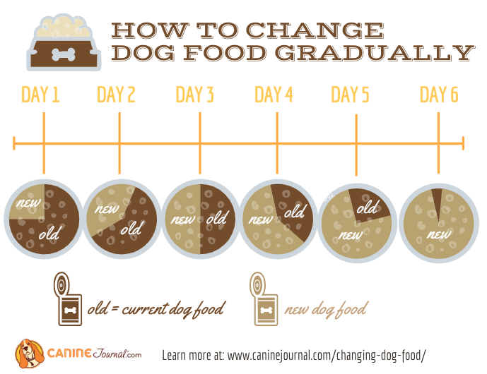 How To Change Your Dog S Food Safely Caninejournal Com Raw Dog Food Diet Dog Food Reviews Raw Dog Food Recipes