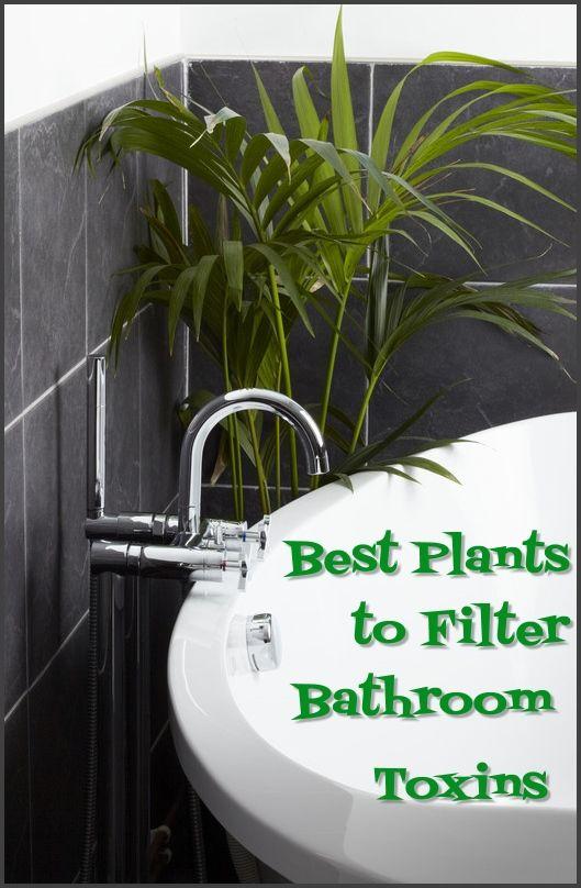 Best Plants To Filter Bathroom Toxins Bathroom Plants Cool Plants Natural Home Decor