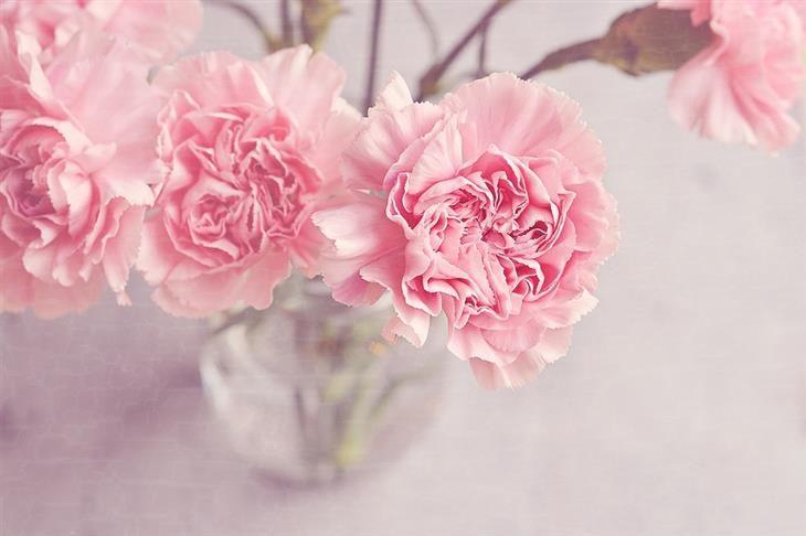 Guia: Mantenha Frescas as Flores no Vaso