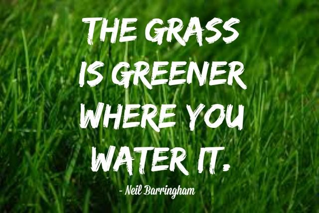 Grass Is Always Greener Quotes: The Grass Is Always Greener Where You Water It.