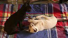 File:Play fight between cats.webmhd.webm