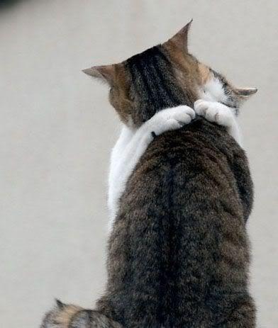 35 Pictures Of Cat Hugs Cats Pets Cat Hug
