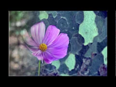 slide show on flowers music by Daroc