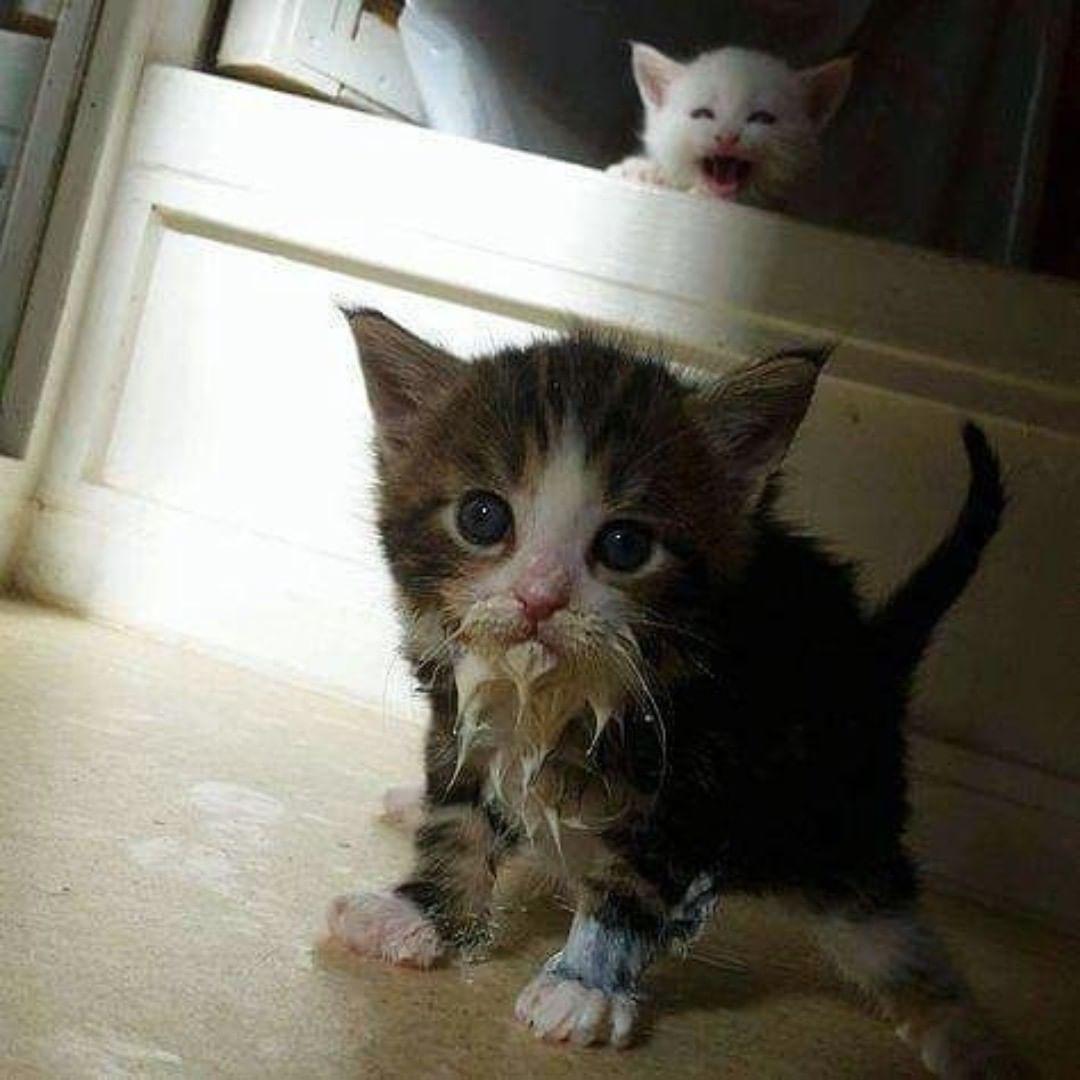 Furoll Pet Hair Removing Roller Cute Cats Kittens Cutest Cats Kittens