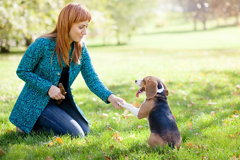 Online Animal Psychology Course Animals, Pet care
