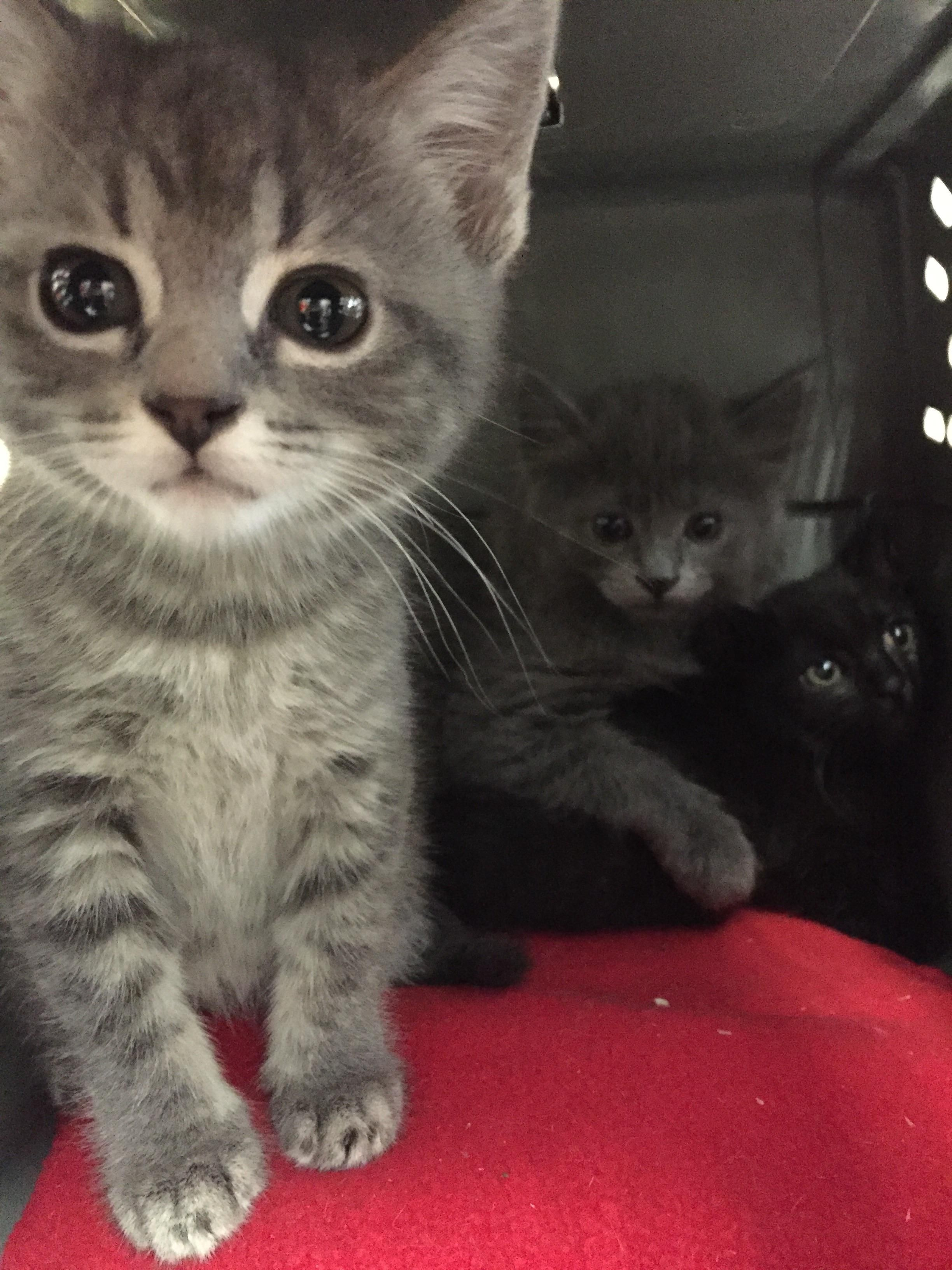 Pin By Cyndi Spehar On Adorable Cats N Kittens Kittens Cutest Foster Kittens Kittens