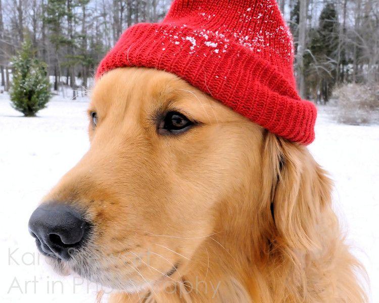 I Don T Keep Warm The Way I Use To Dogs Pets Goldenretrievers