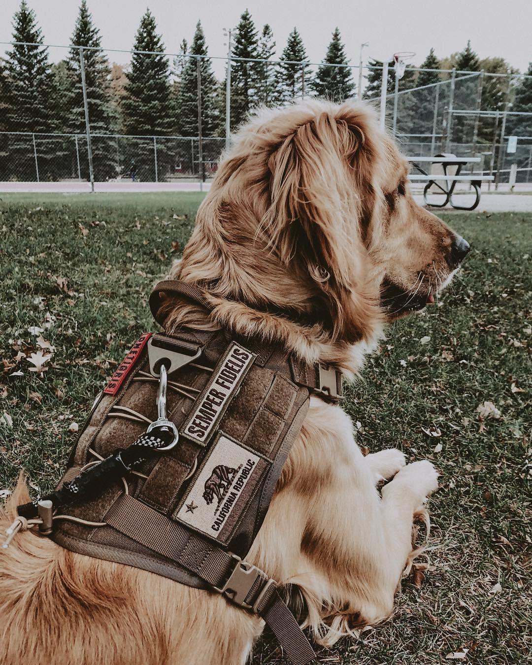 Onetigris Fire Watcher Dog Harness Petaccessories Dog
