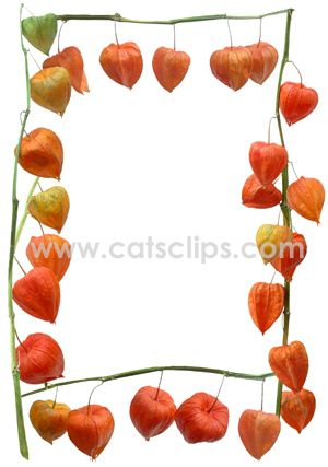 Also Known As Japanese Lantern The Orange Physalis Alkekengi