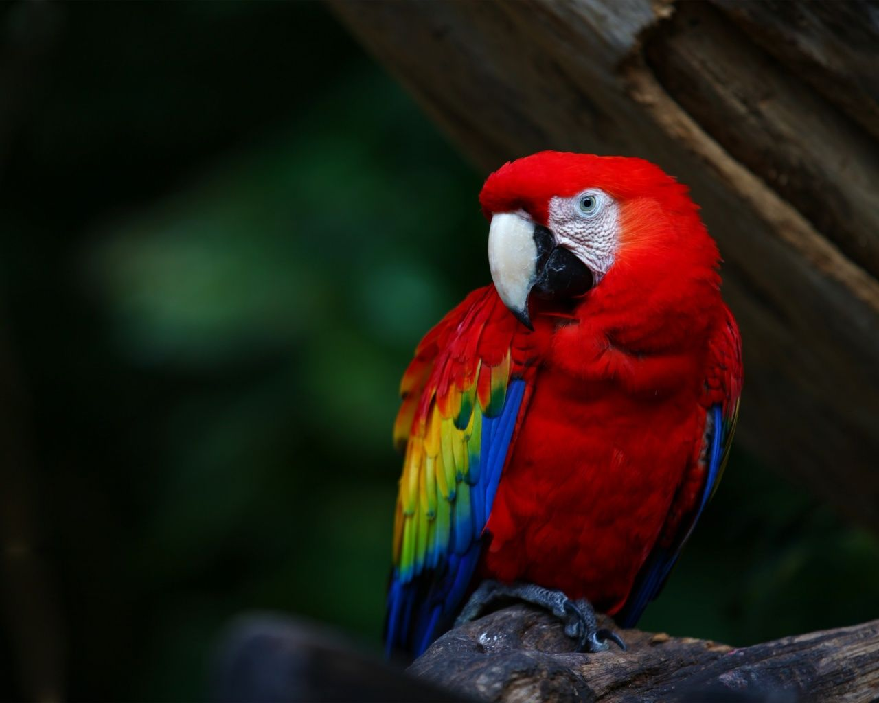 Pin On Nature Colour Scheme