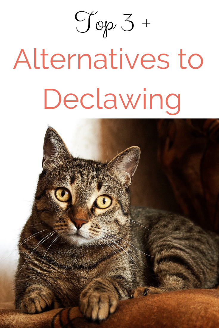 Looking for humane alternatives to declawing? Learn more