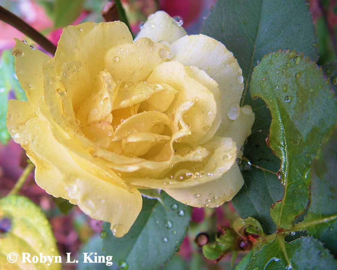 Morning Dew by Robyn King  prints available through smugmug