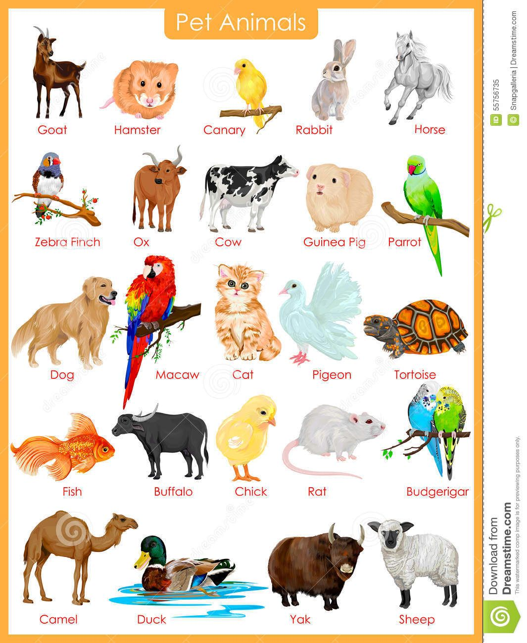 Image result for pet animals pictures Animals for kids
