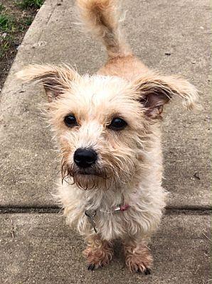 Elmwood Park, NJ Terrier (Unknown Type, Small). Meet Foo