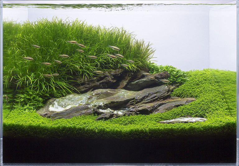 Aquarium Design Group - Hardscape | Aquarium landscape ...
