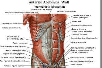 abdominal muscle diagram | Diarra