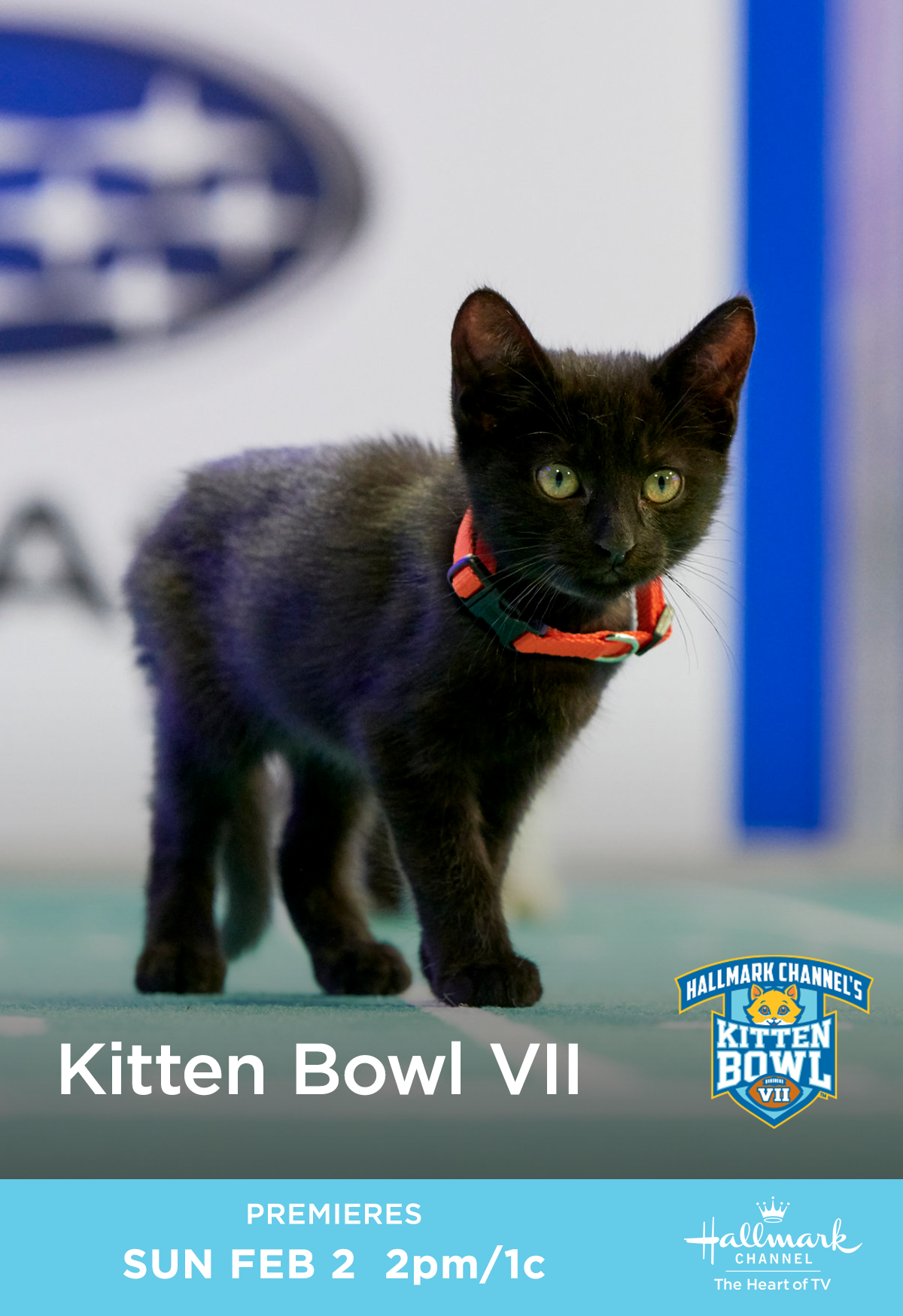 Hallmark Channel S Seventh Annual Kitten Bowl Is Back And It S Cuter Than Ever Join Our Catletes As They Take The Field And In 2020 Kitten Bowls Kitten Kittens Cutest