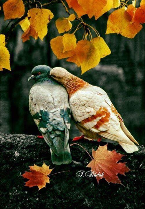Épinglé par Caro♥Cocci sur Jolie plumage... | Animaux beaux, Animaux et oiseaux