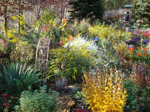 Great looking fall garden Thanks for sharing, HGTV Hollyu0027s Other