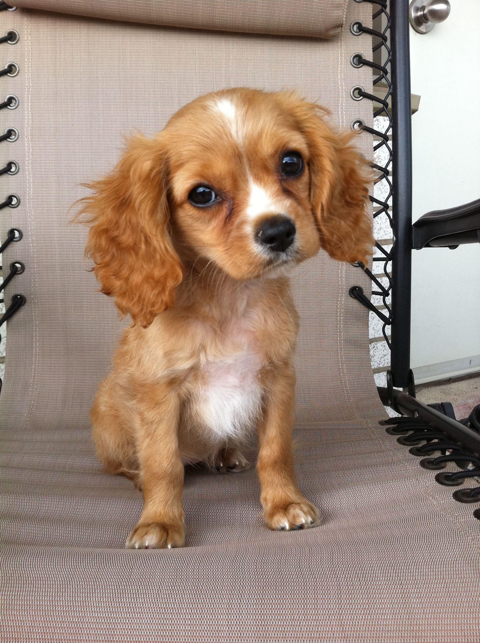 Finley S Dog Treats