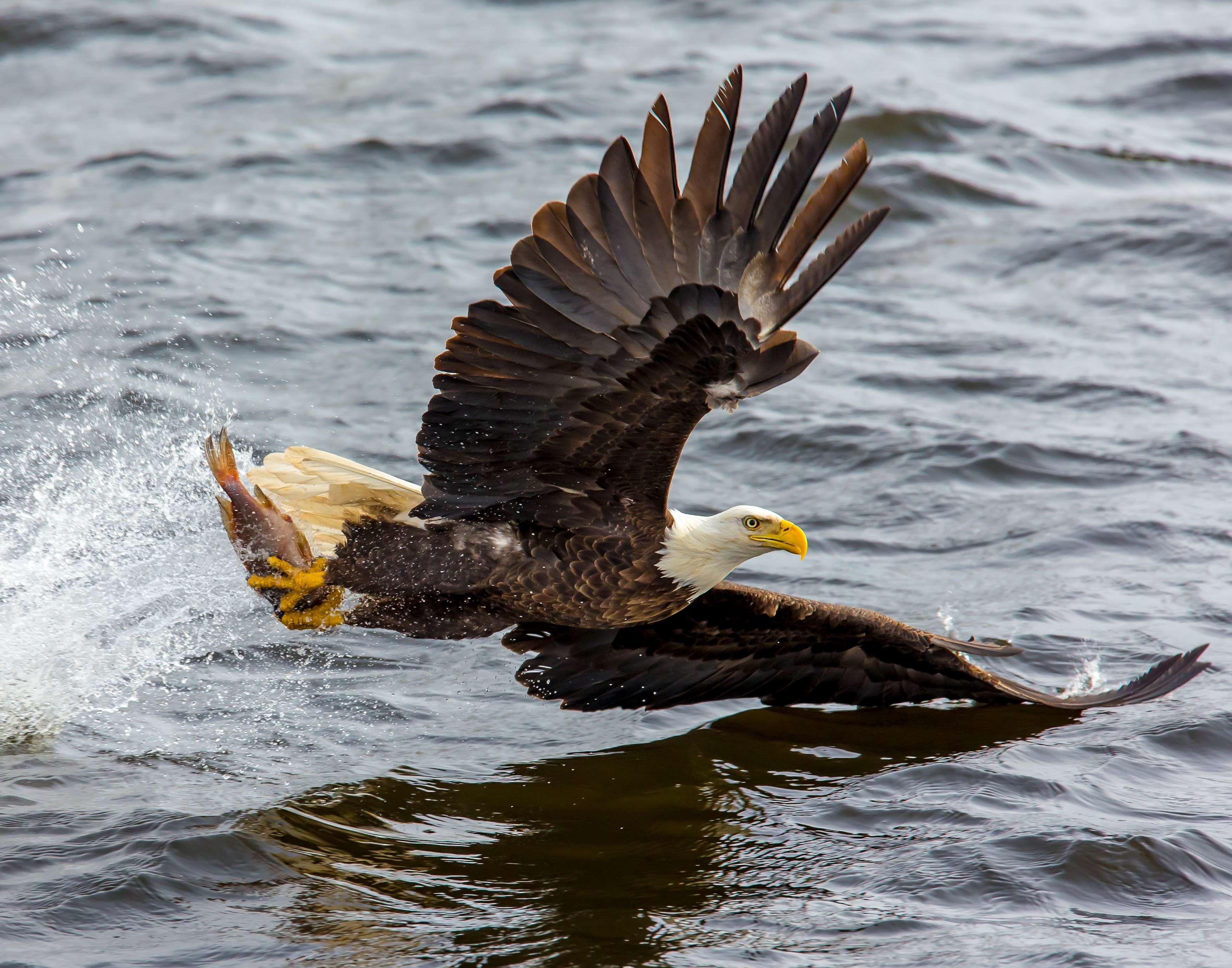 Обои eagle, beak, the, клюв, winter. Животные foto 16