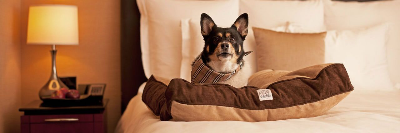 Let Your Dogs Tag Along On Travels To Georgia Hyatt Place Savannah Airport Is The Best Priced Pet Friendly Hotel West Of Downtown District