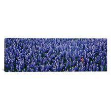 Furniture & Home Decor Search: purple accessories | AllModern