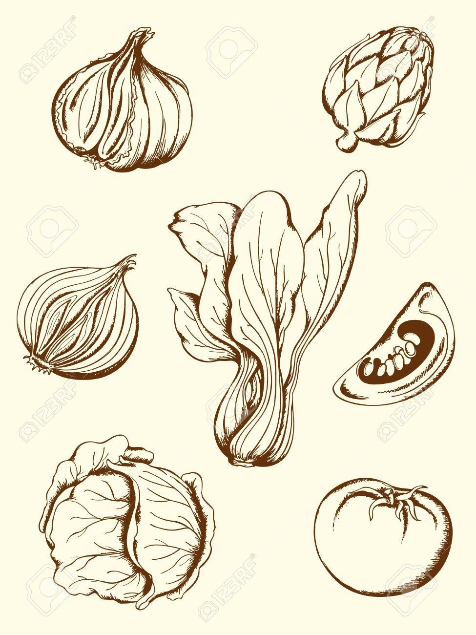 Vintage Vegetable Illustrations Free Google Search Vetores Desenho Estampas
