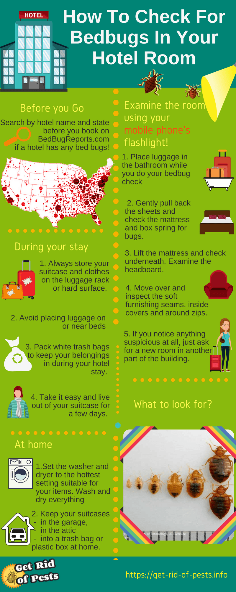 Bed Bugs In A Hotel What Can You Do Step By Step Infographic 2018 Bed Bug Bites Bed Bugs Bed Bugs Infestation