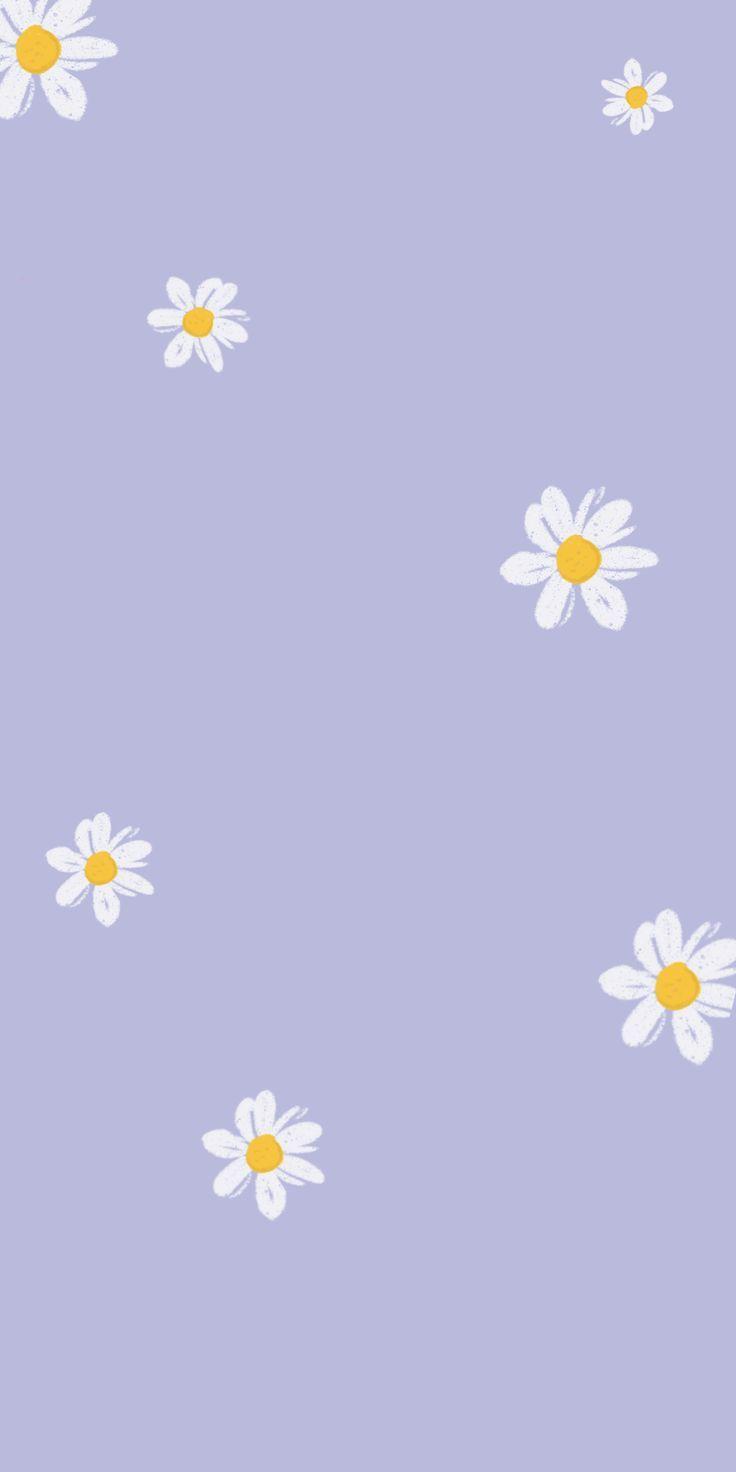 Daisy Purple Mobile Phone Free Wallpaper