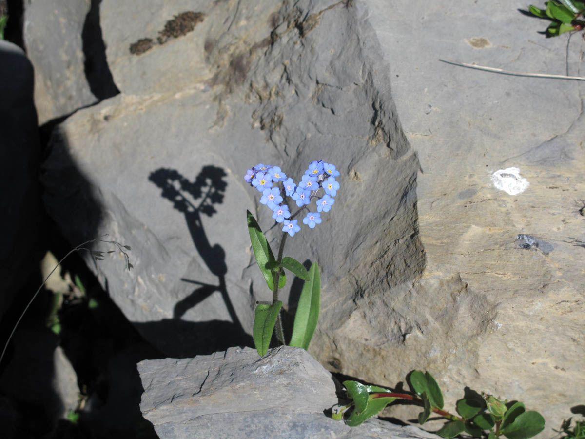 Fleur En Forme De Cœur Hearts In Nature Pinterest Amor