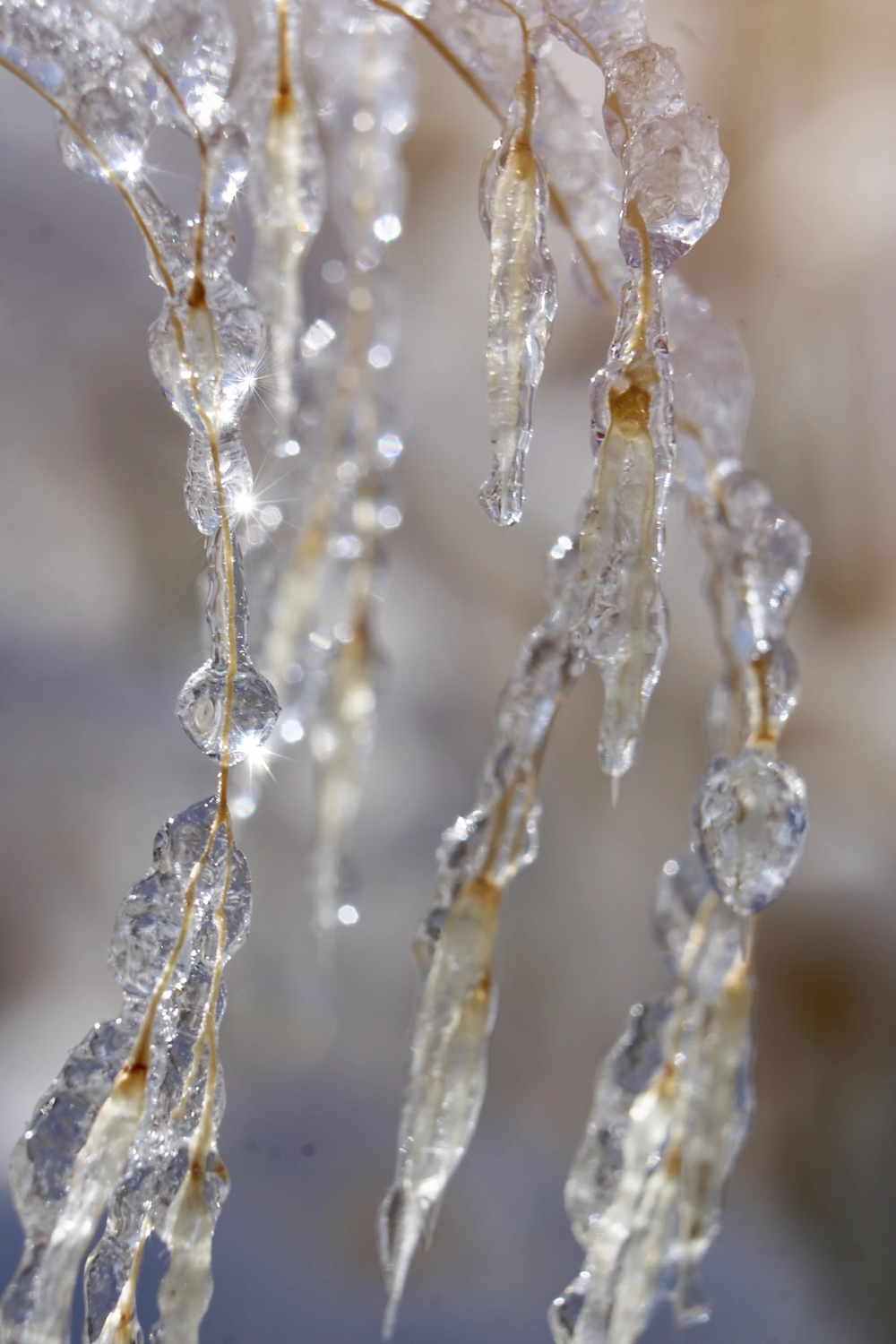 The Wonders of Winter -  frosted ice crystals covering grass with bokeh sparkles... -    The Wonders of Winter –  frosted ice crystals covering grass with bokeh sparkles. Enjoy these macro photos and winter quotes of the wonders, awe, and magic of winter.  The Wonders of Winter –  frosted ice crystals covering grass with bokeh sparkles…  Reverie . knottedflowers Winter Wonderland :: Tomten & Ice The Wonders of Winter –  frosted ice crystals covering grass with bokeh sparkles. Enjoy these macro