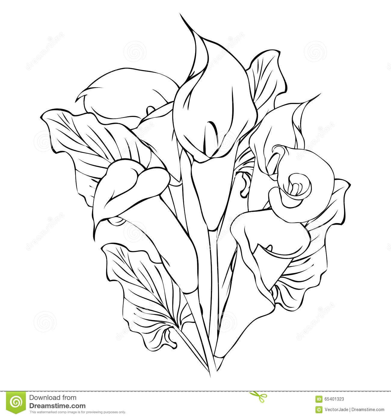 Calla Lily Flowers Outline Drawing Illustration Callas White Background 65401323 Jpg 1 300 1 390 Pixels Lilies Drawing Flower Drawing Flower Drawing Images