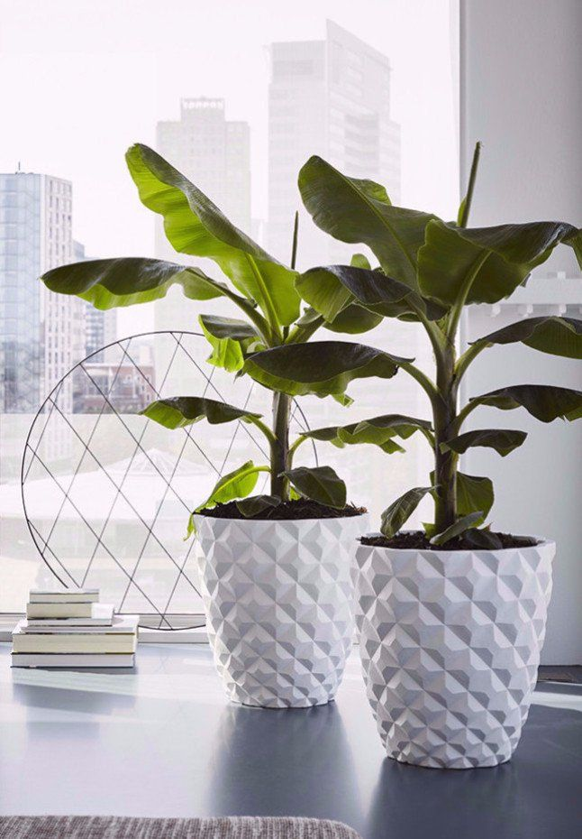 Dalia Planter In White Cement By Lene Bjerre Design Indoor Planters Planters Plant Decor Indoor