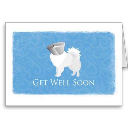 AMERICAN ESKIMO Note Cards With Envelopes