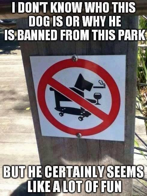 5b4c2640e961426a9716f525eec441bb damn dog ruined it for all the other smoking and drinking