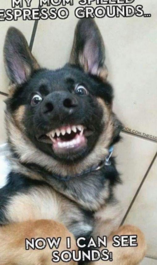 ✔ Niedliche Hunde Meme Tierbilder