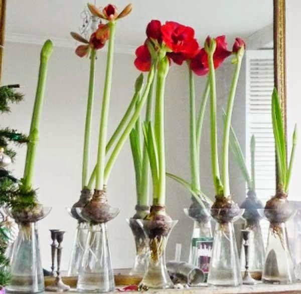 Faire Fleurir Des Bulbes De Tulipes En Vase Flores Plantas Azucena
