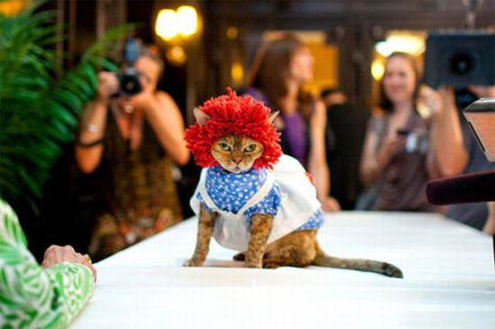 New York Cat Fashion Show