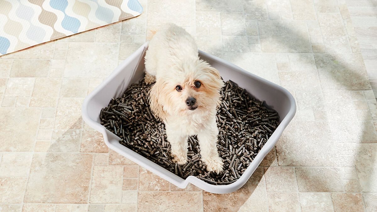 Helpful Tips To Successfully Train Your Dog To a Litterbox