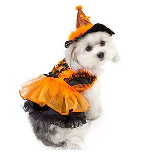 9 Halloween Costumes For The Coastal Pet Pet Halloween Costumes