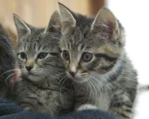 Adopt 2 kittens (male & female) on Kittens, Cute cats